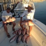 lots of mutton snapper caught with Curly in Marathon FL